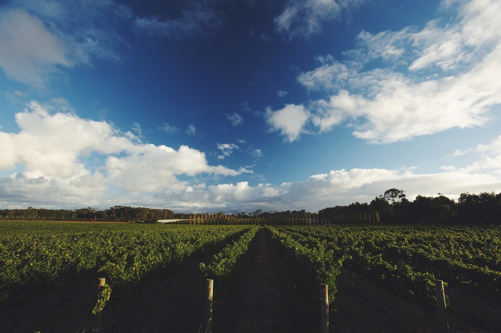 Isca Margaret River Vineyard